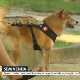 RJTV1 16/09/2019 – Projeto de Lei quer proibir venda de animais de estimação no Rio de Janeiro